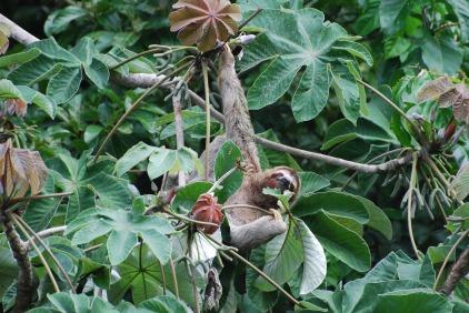 Costa Rica Addie Upload 098